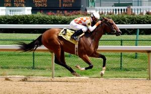 Horse Racing-hdhut.blogspot.com (8)