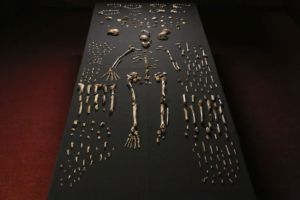 Fossil remains of Homo Naledi